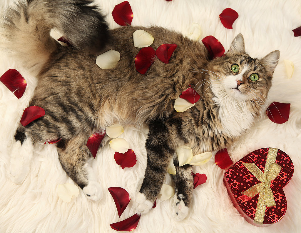 4 ideas to make your valentine 39 s day special the fashion - Valentine s day animal pics ...